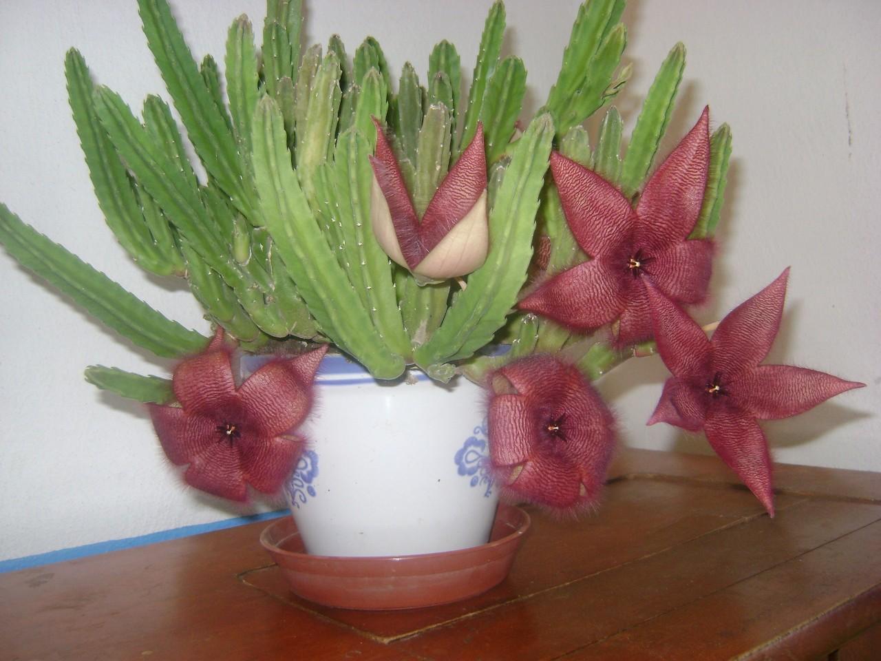 Комнатные цветы форум