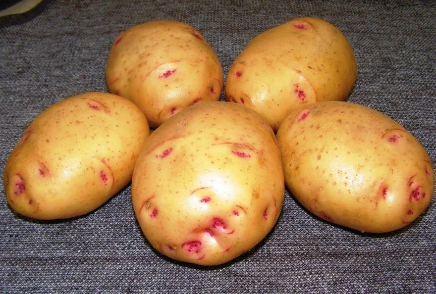 картошка.jpg