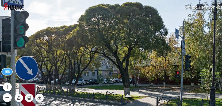 дерево3.JPG