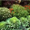 How To Have The Perfect Garden