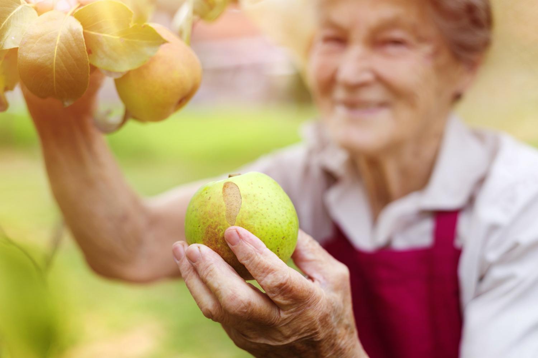 Как сделать яблоки свежими