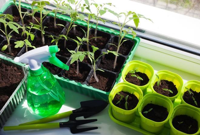 Чем подкормить растения в домашних условиях