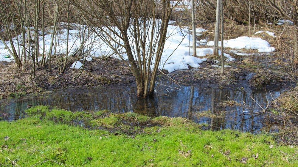 Застой воды в саду фото