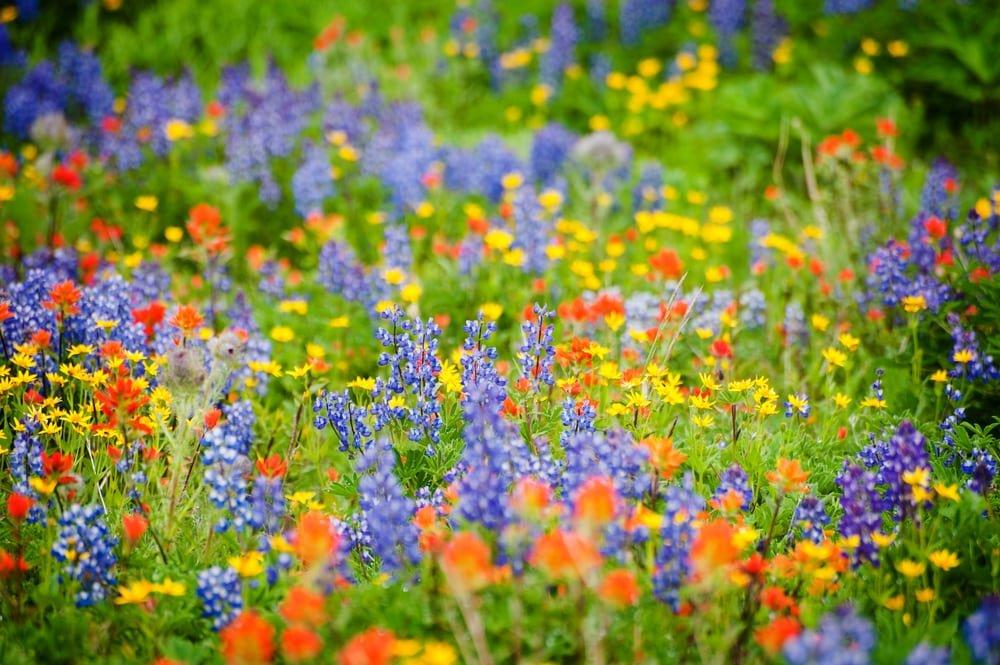 платят картинка яркие полевые цветы правило