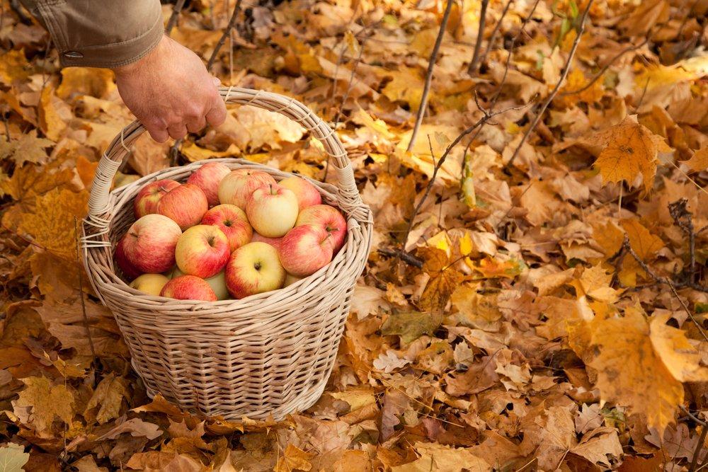 Яблоки в корзинке на осенних листьях