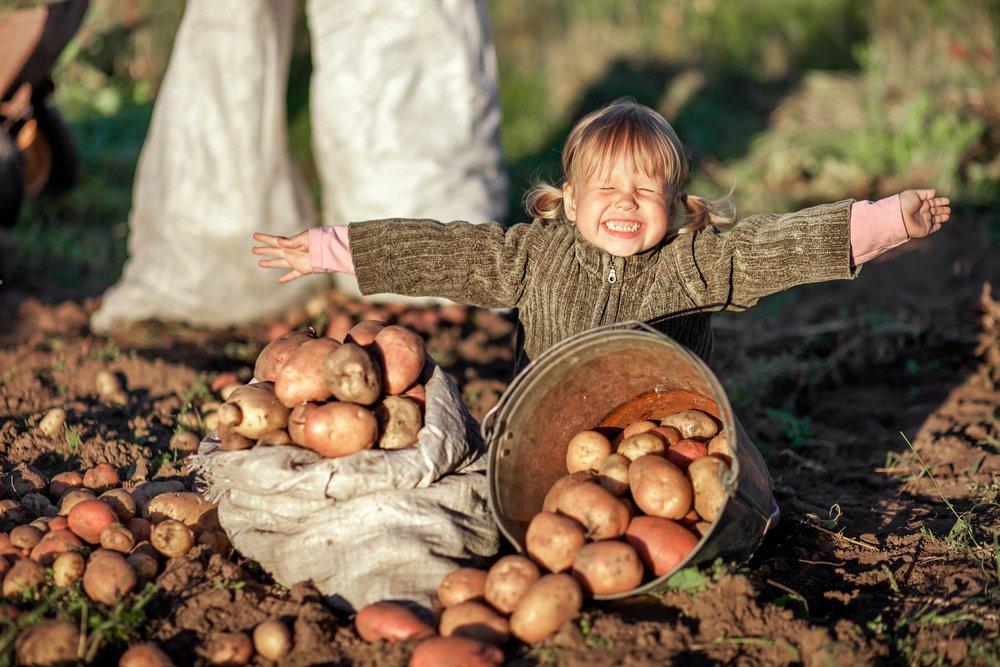 Ребенок и ведро с картофелем
