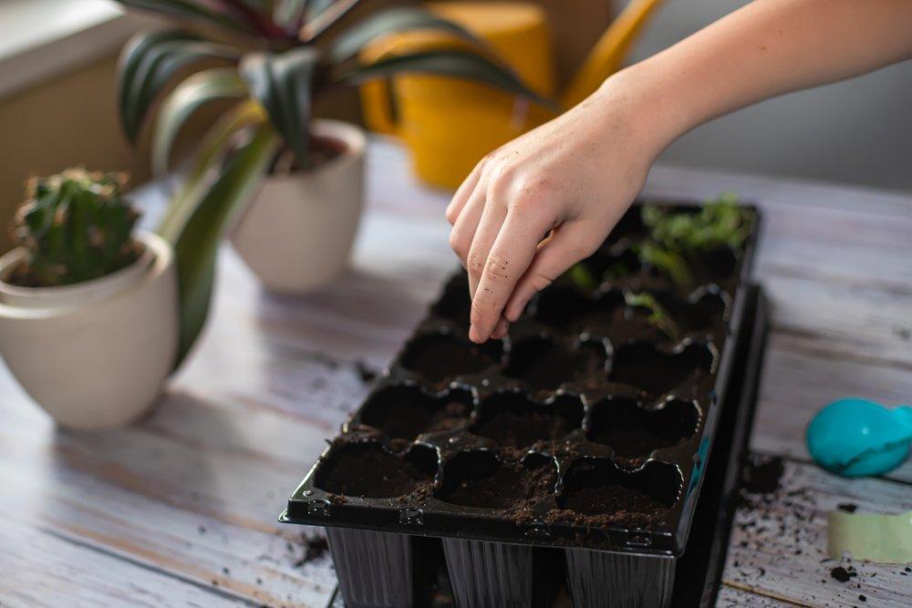 Календарь посева семян на рассаду в 2020