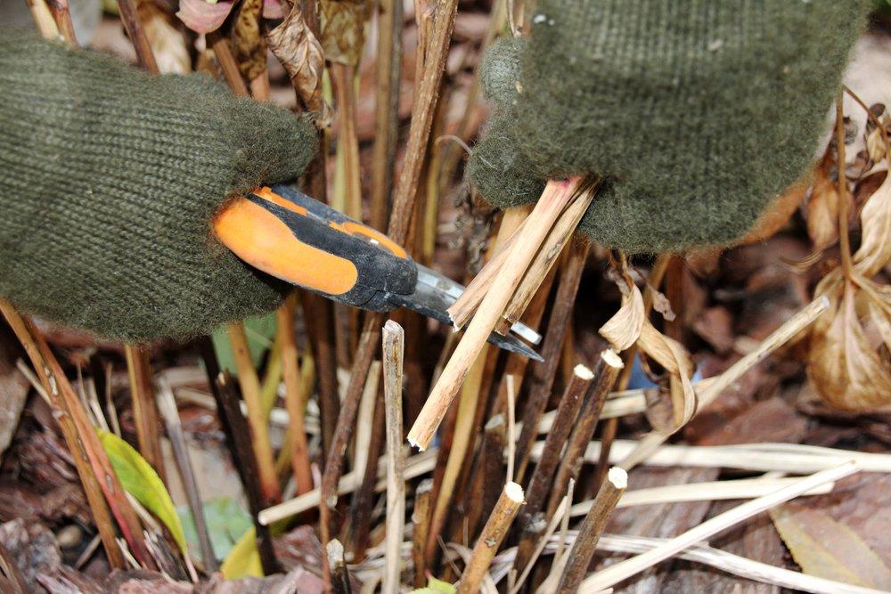 Как обрезать кустарники осенью