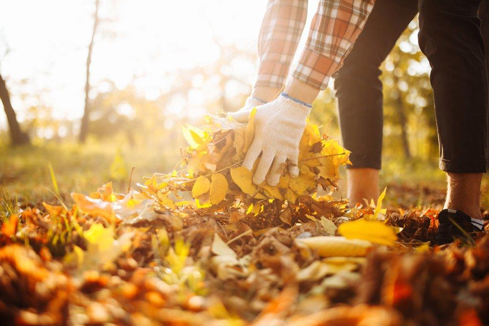 Зачем убирать опавшие листья