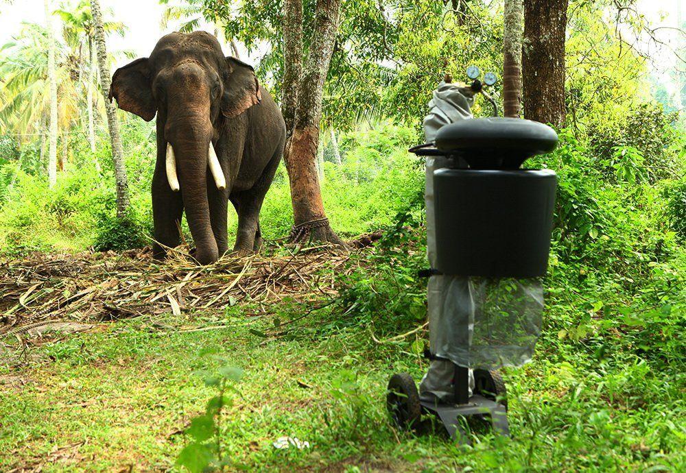 Ловушка москитов в Индии