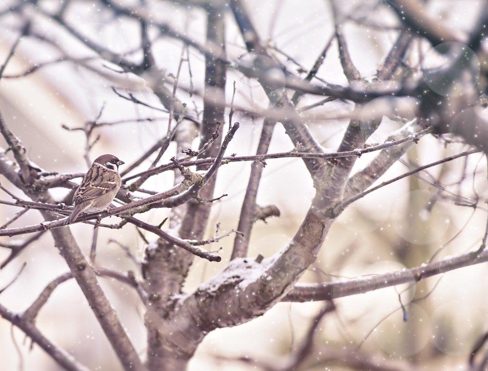 Птица зимой