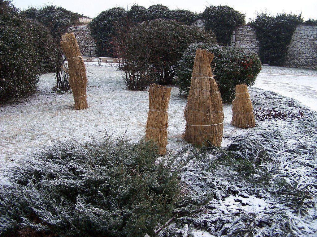 Укрытые на зиму растения