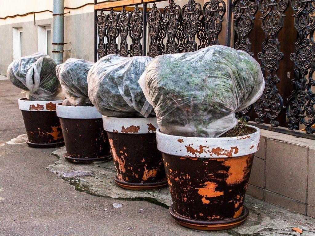 Растения укрытые на зиму