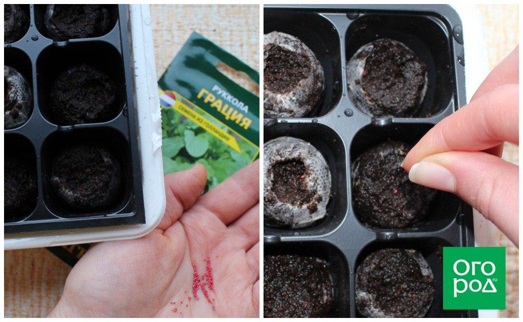 цинния посев семян на рассаду хитрости