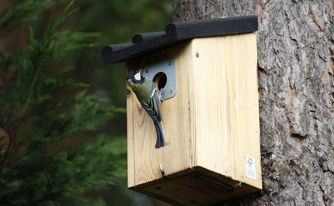 Домик для птиц в саду