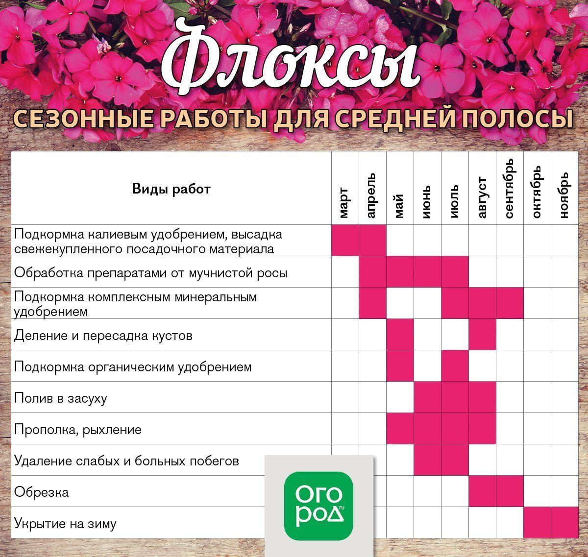 календарь ухода за флоксами на весь год