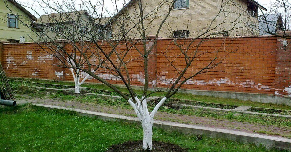 подкормка для деревьев весной