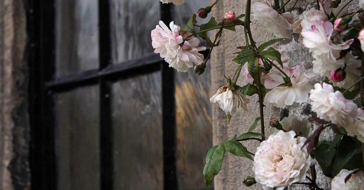 Все что необходимо знать о розах от А до Я