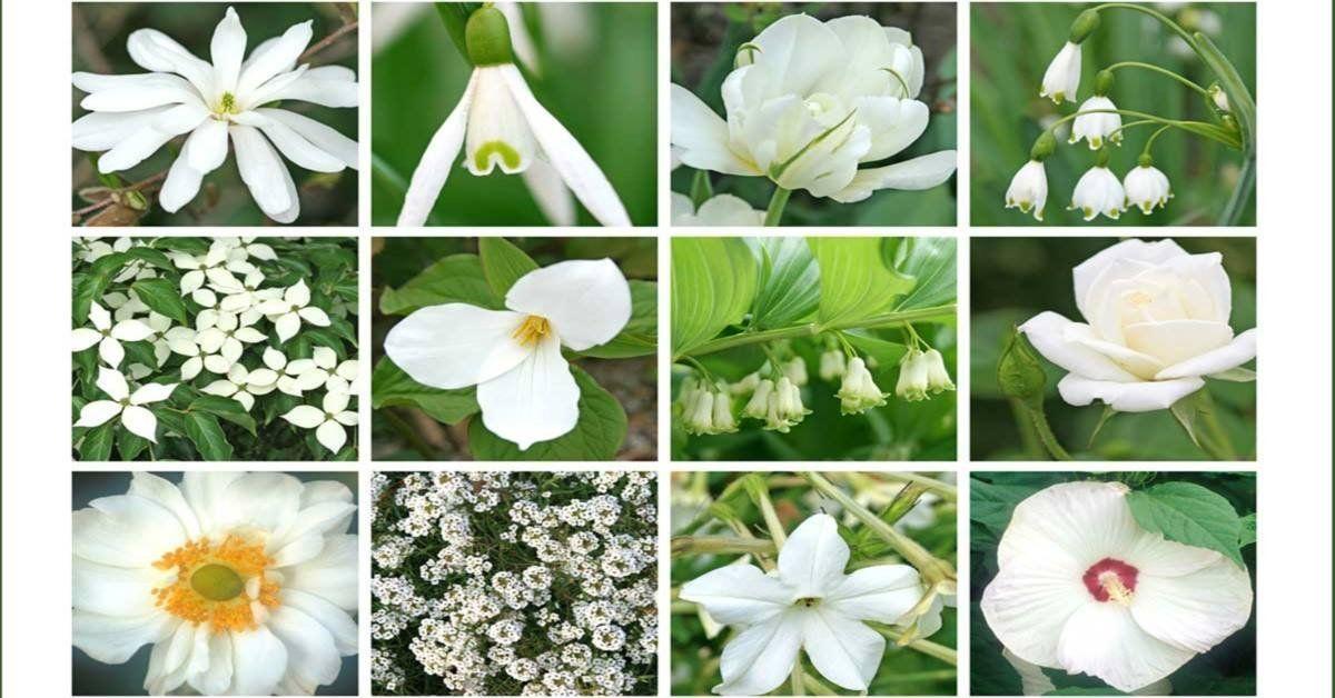 Неприхотливые многолетние цветы цветущие все лето для