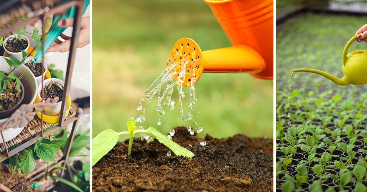 Как часто поливать рассаду огурцов на подоконнике
