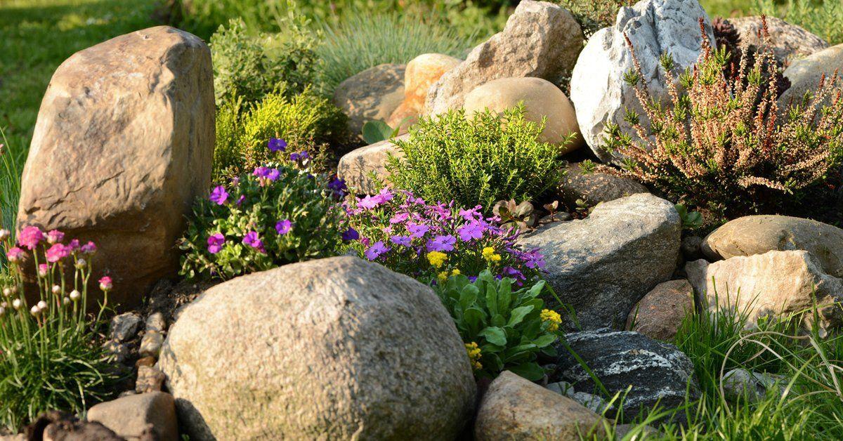 Цветы для клумбы цветущие все лето
