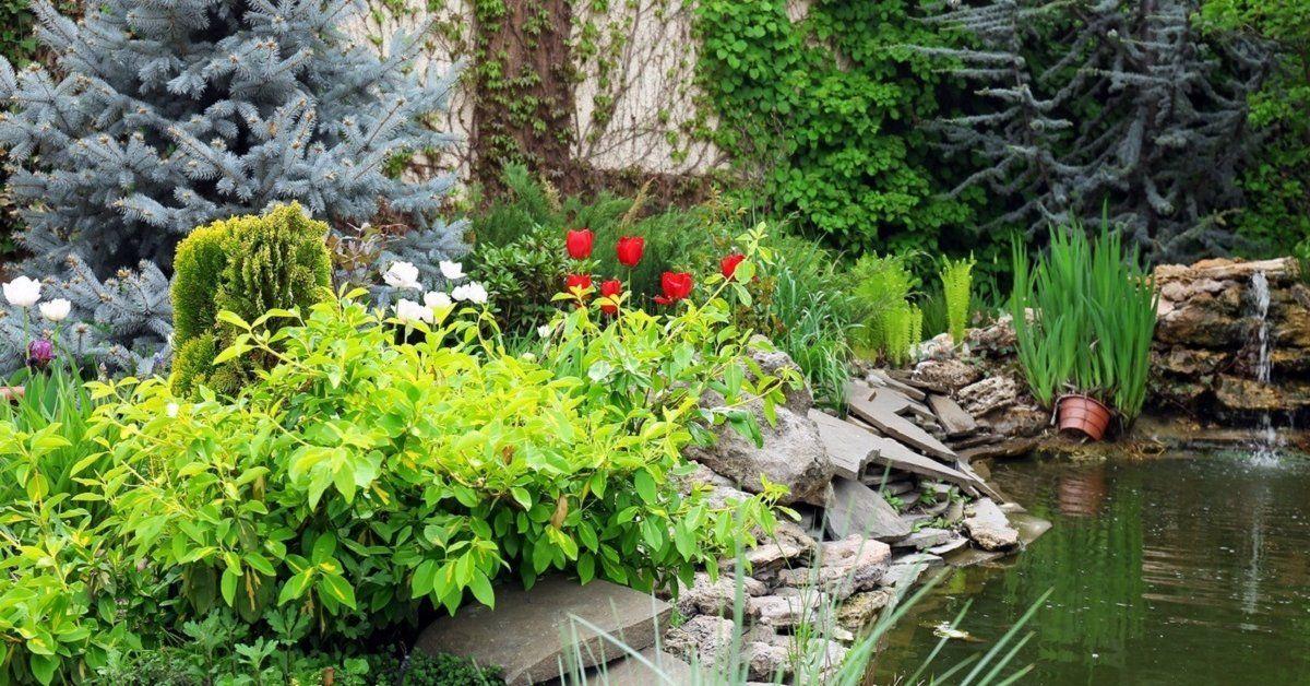 Растения, используемые для осушения почвы на дачном участке.