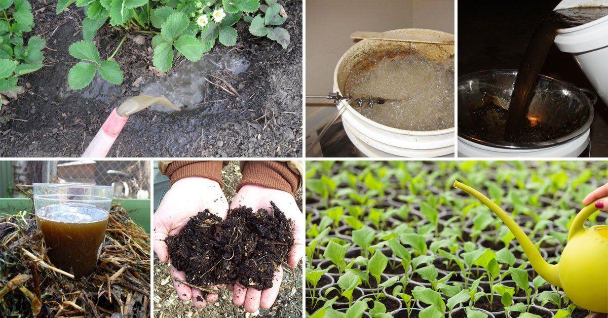 Что такое компостный чай, как его правильно сделать и применять на даче |  Дела огородные (Огород.ru)