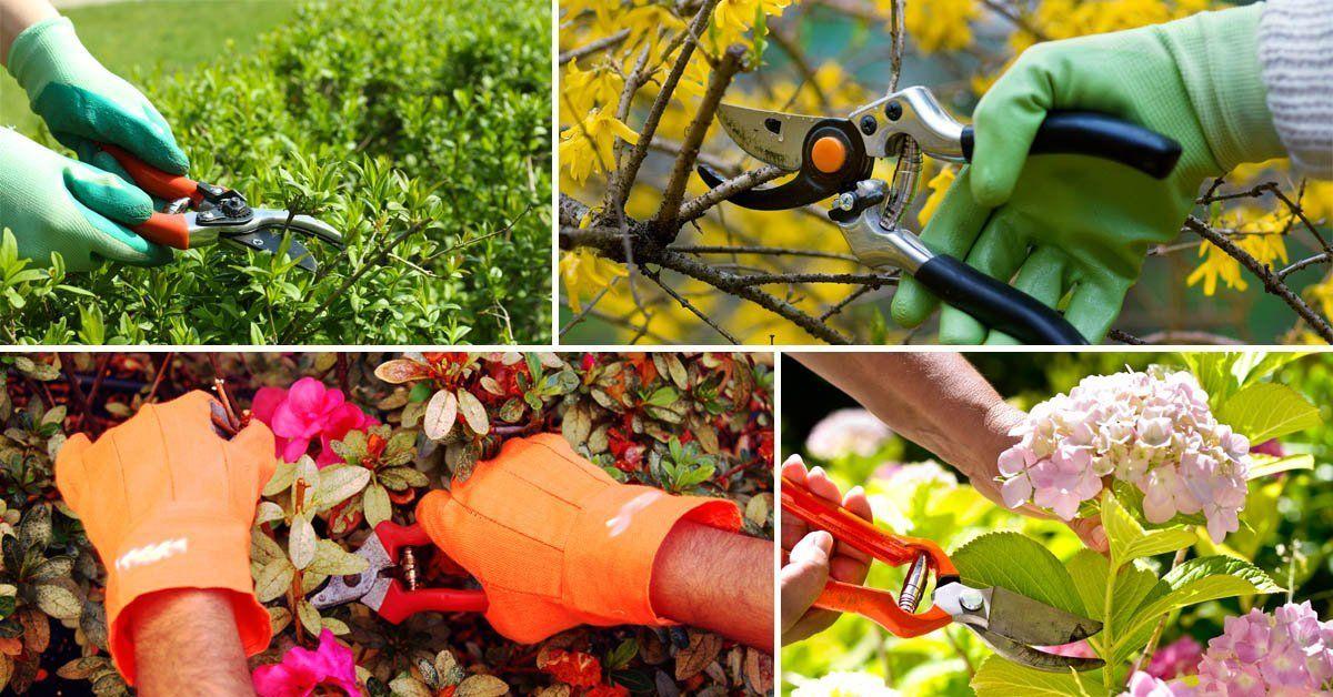 Обрезка вейгелы как правильно обрезать кустарник после цветения Стрижка весной осенью и летом для начинающих Как нужно формировать куст