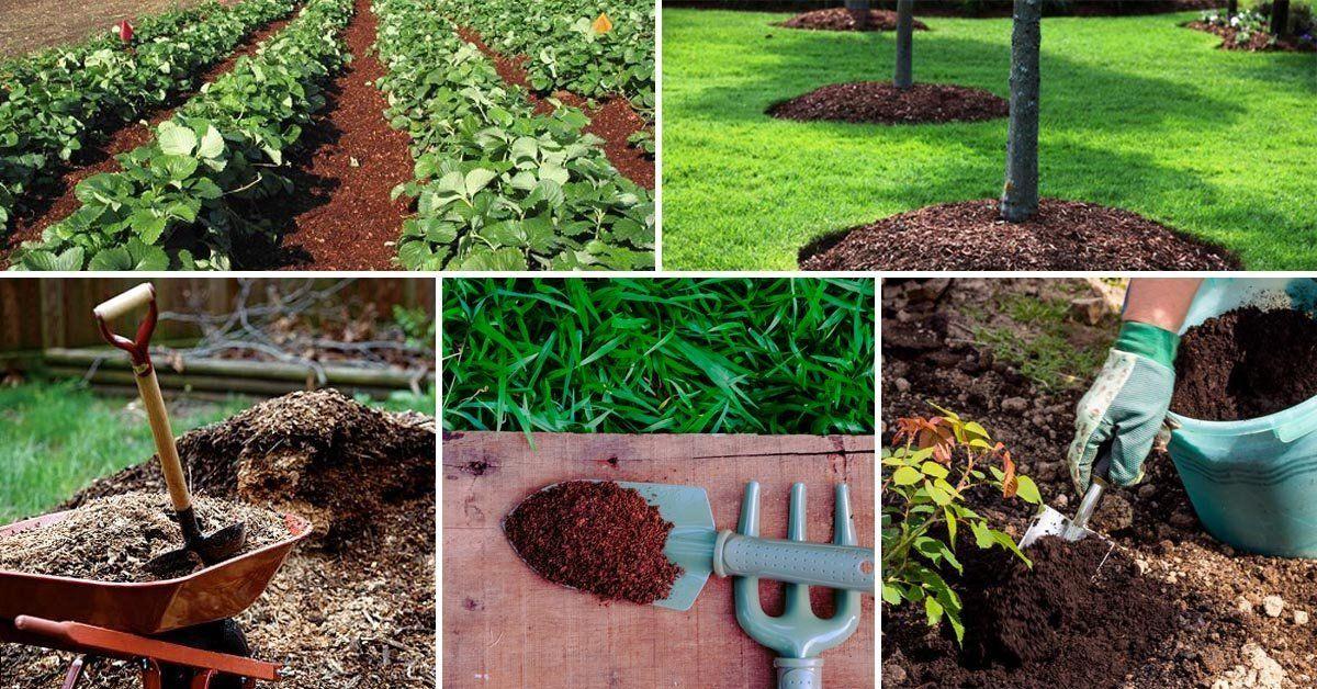 Компост: состав и как правильно приготовить компост