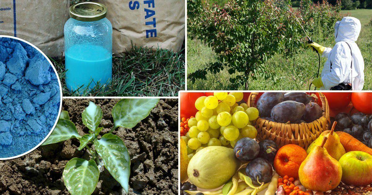 Бордосская жидкость: применение в садоводстве. Как приготовить бордосскую жидкость