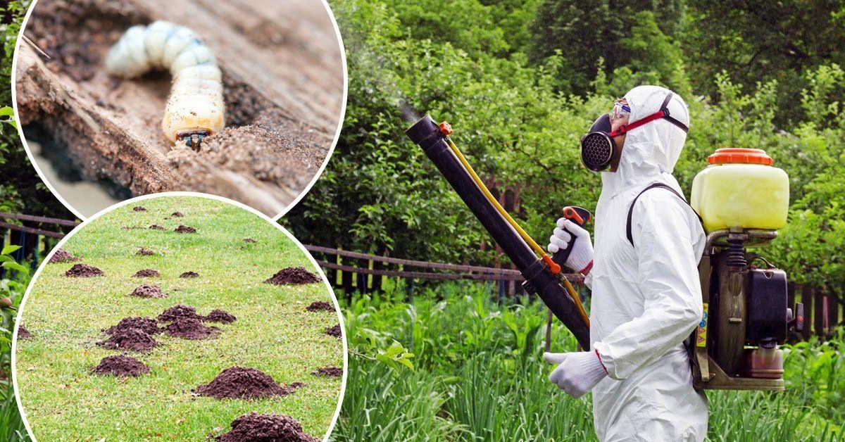 Как избавиться от вредителей в огороде