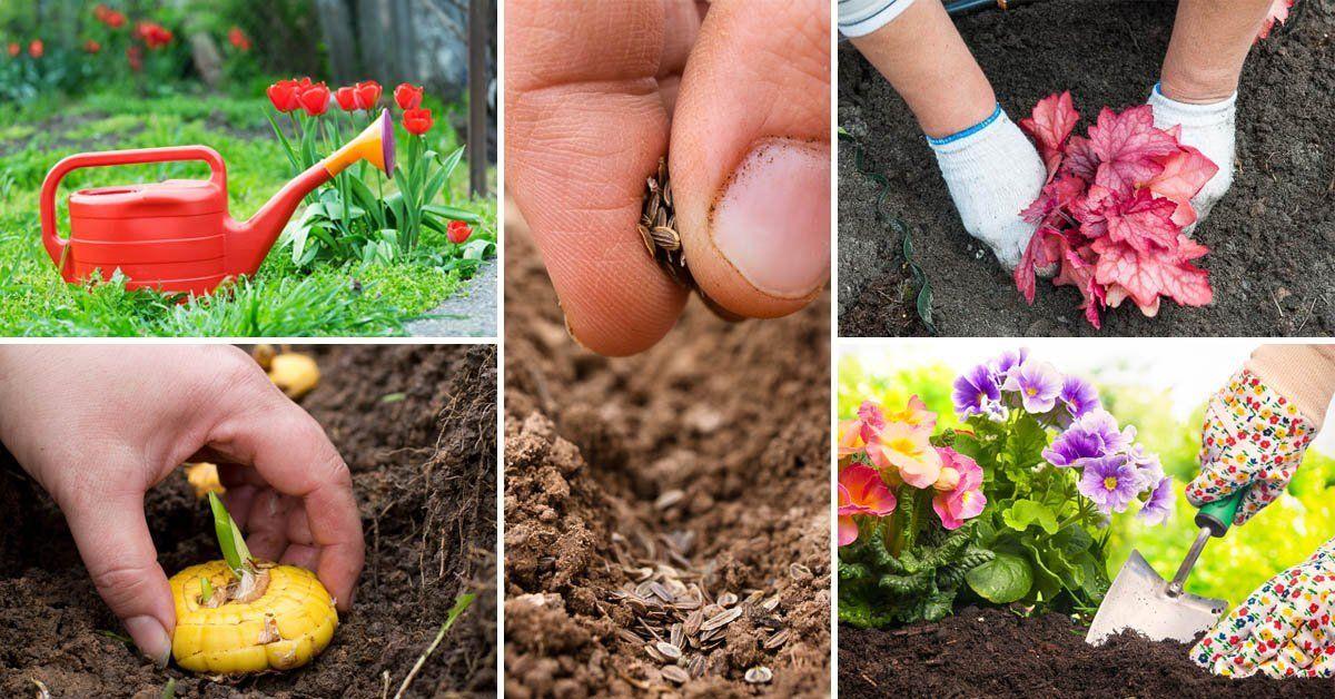 Какие растения и цветы можно сажать осенью 38