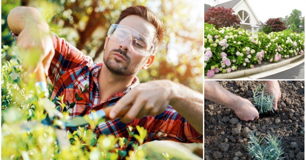 Как сажать живую изгородь - Работы в саду