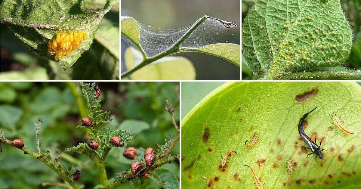 Избавиться от вредных насекомых