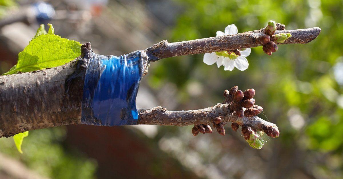 Колировка деревьев осенью - Всё о цветах