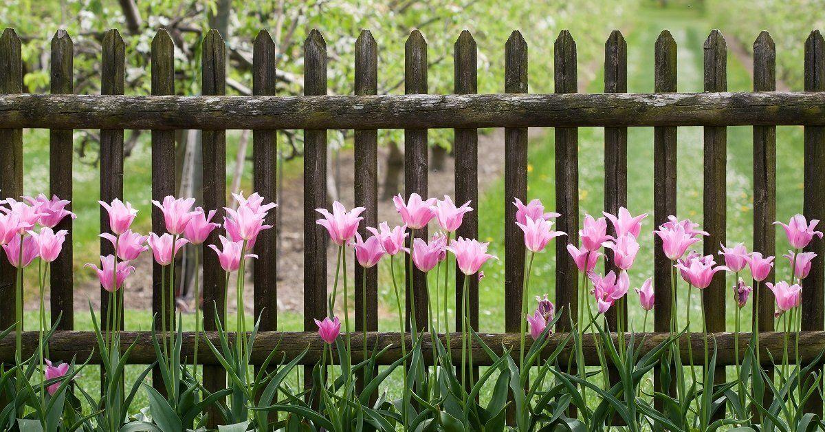 Удобрения для тюльпанов осенью при посадке какие выбрать для подкормки