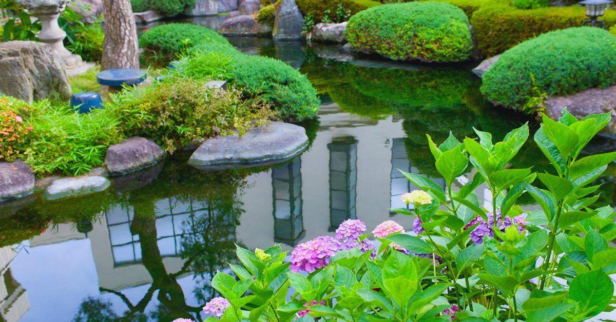 Водные и прибрежные растения для пруда с фото и названиями
