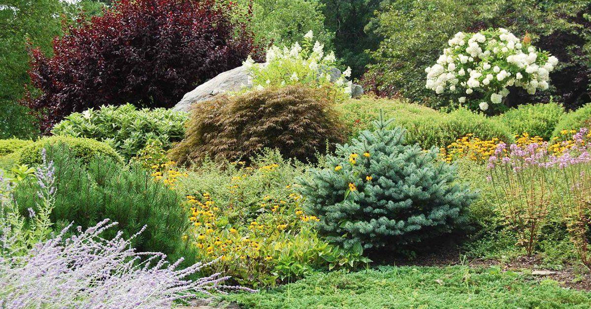 Расположение деревьев и кустарников на участке схема