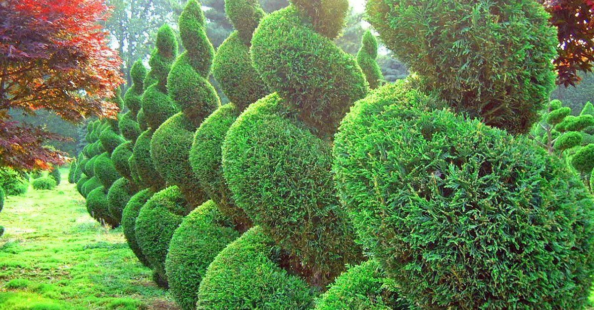 Стрижка кустарников: декоративная, фигурная, топиарная, живых изгородей, хвойников.. Стрижка кустарников в стиле топиар