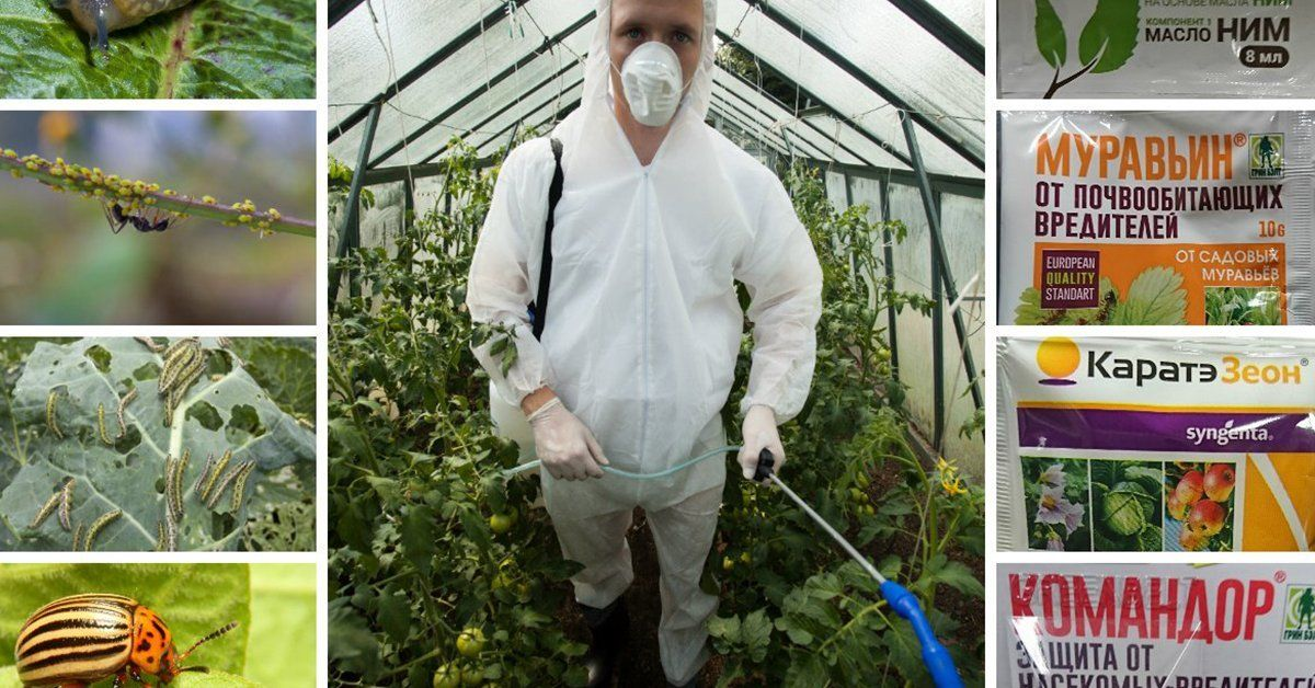 Инсектициды список препаратов для комнатных растений. Инсектициды – надежные помощники цветоводов.
