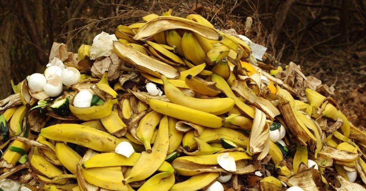 Необычное удобрение: делаем подкормку из банановой кожуры