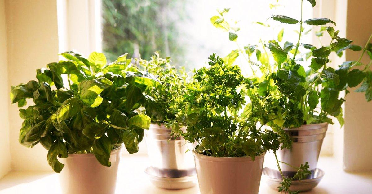 Полезные растения выращивание дома 66