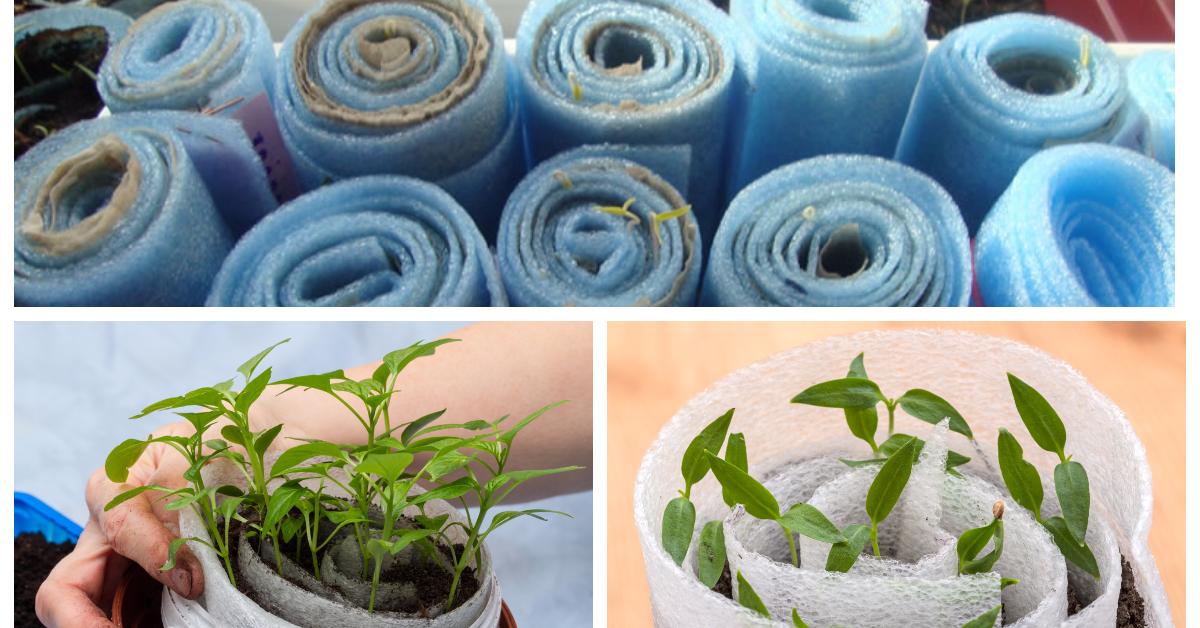 Посадка томатов в улитку на рассаду: как сажать и выращивать видео