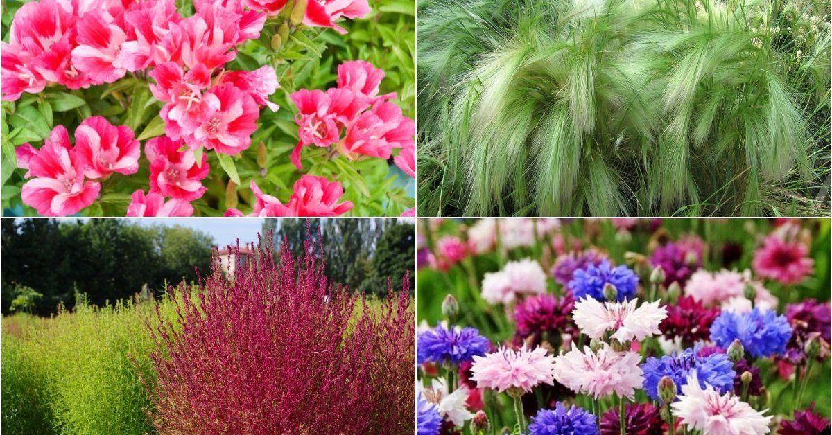 Какие растения и цветы можно сажать осенью 37