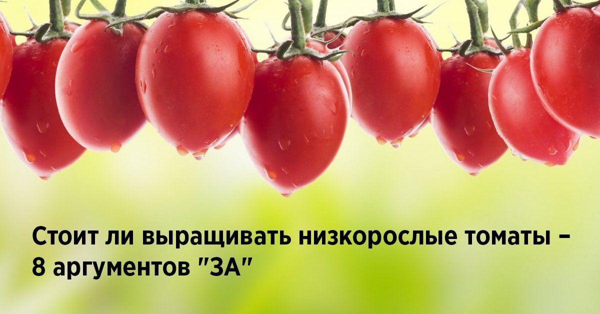 Низкорослые сорта помидоров секреты успешного выращивания