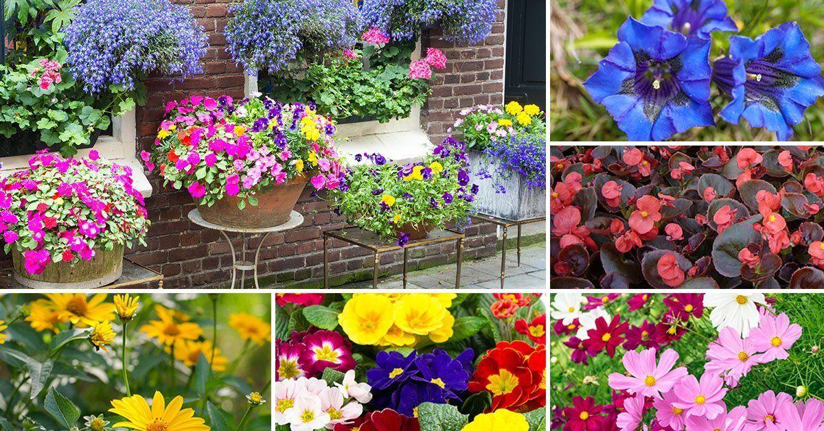 Все о выращивание рассады цветов для продажи 118