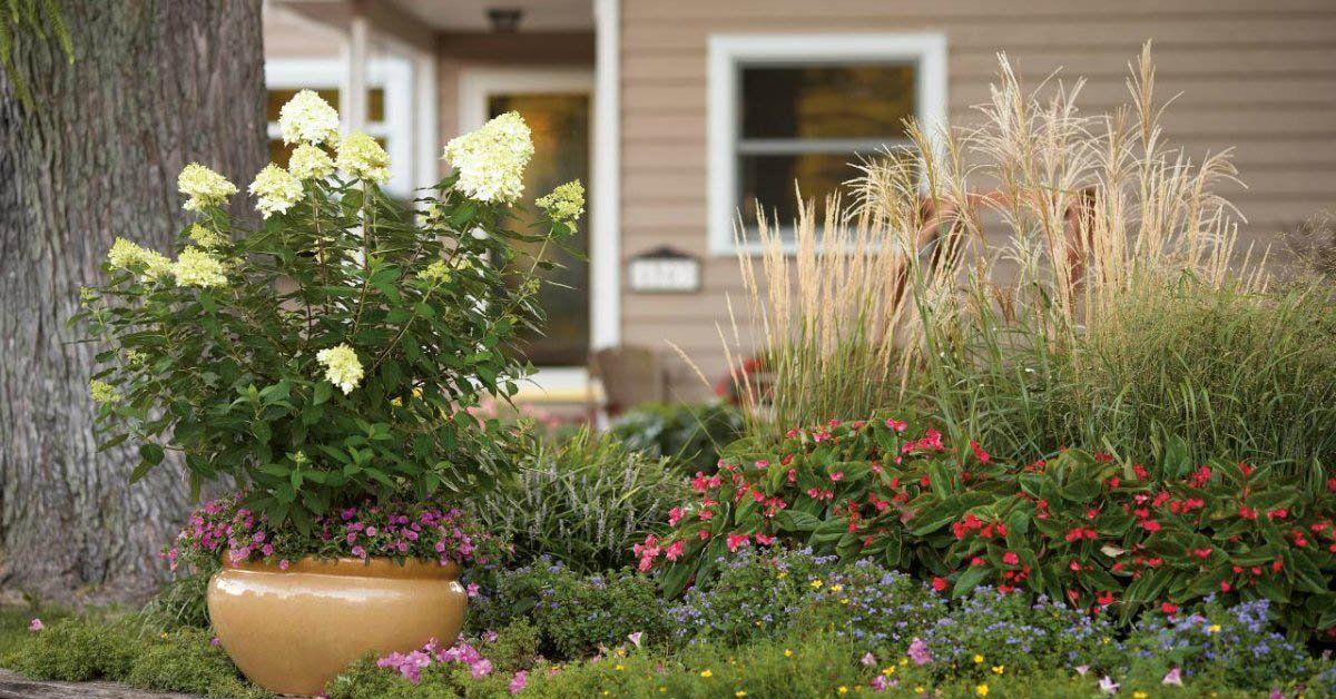 Популярные цветы для сада и огорода