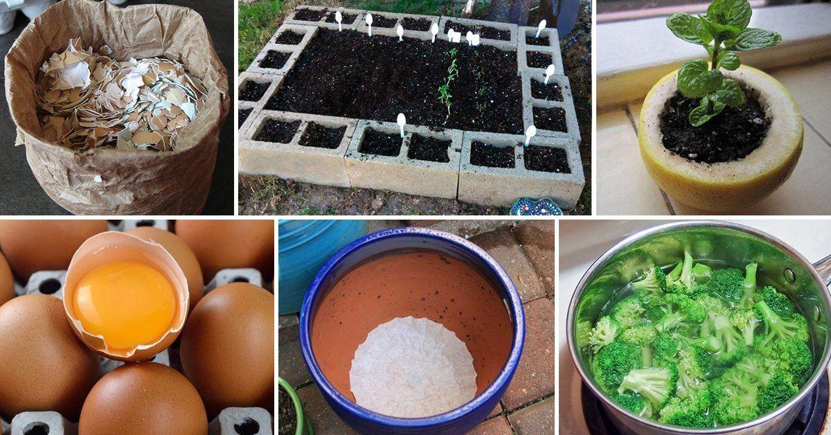 Полезные советы дачнику, садоводу и огроднику.