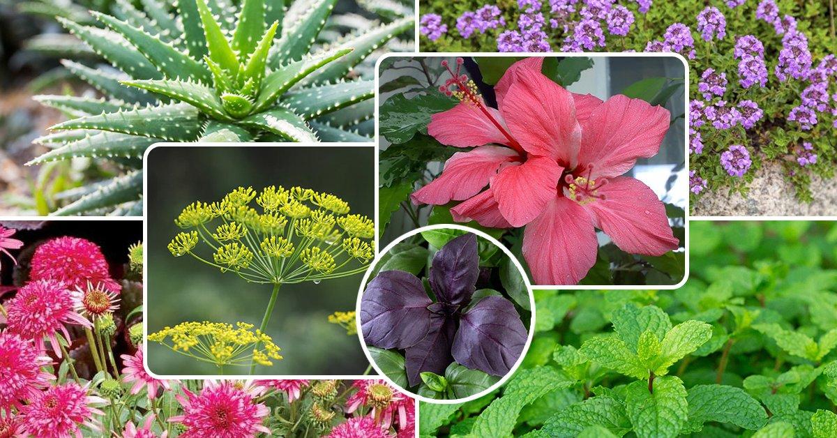 Поддержка комнатных растений