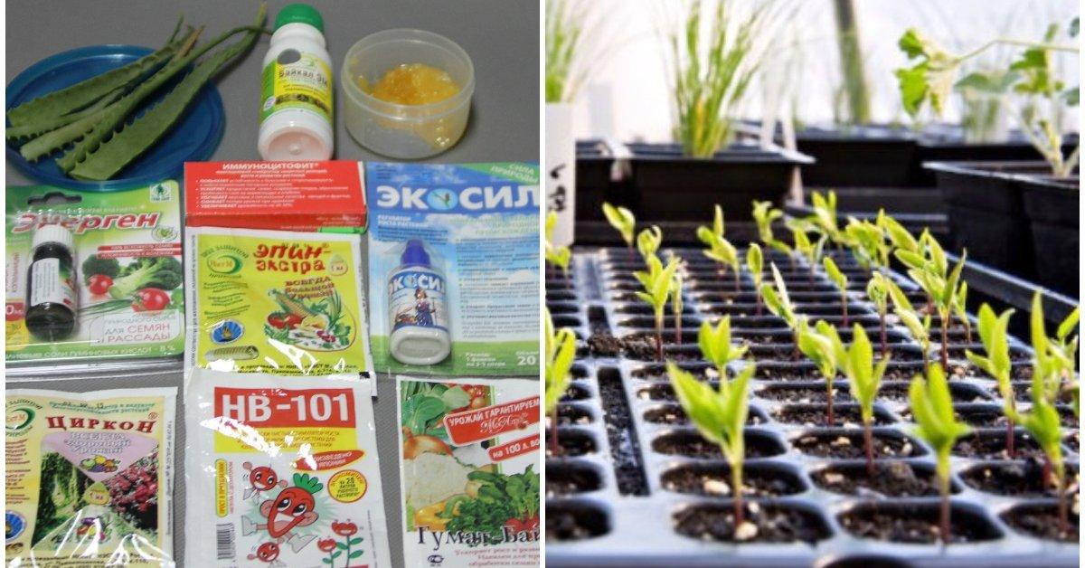 Семена применяем стимуляторы роста
